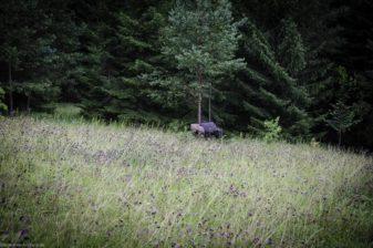 I A 077 August 16 1252-bogenschiessen
