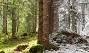 Behind the scenes – 11. Bearpaw Kill-Turnier in Eisenbach